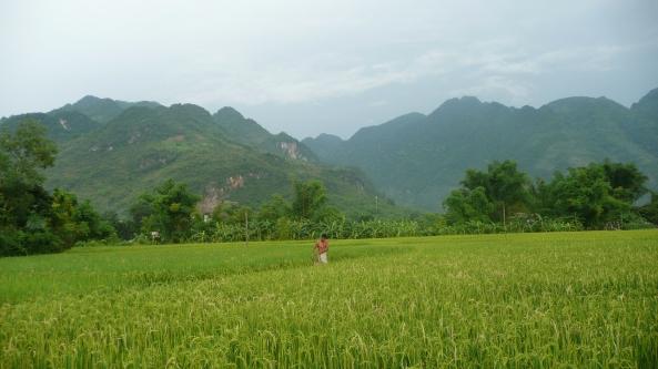 Paysage campangard de la vallee de Mai Chau