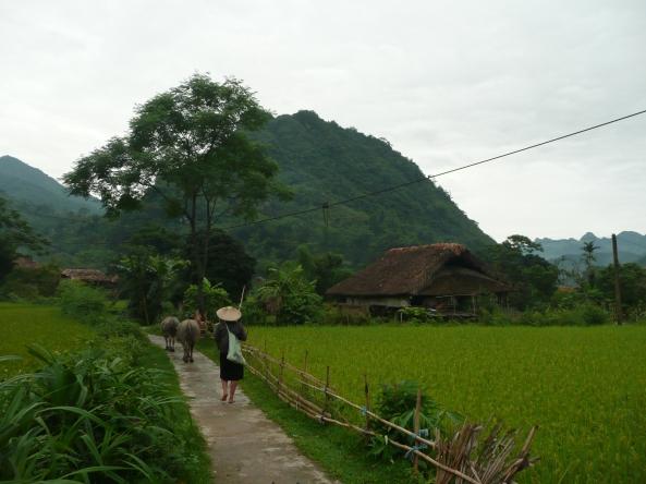 Au coeur de la campagne vietnamienne