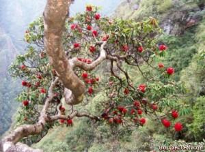 park national de Hoang Lien