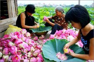 The au lotus vietnam