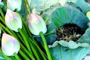 The au lotus