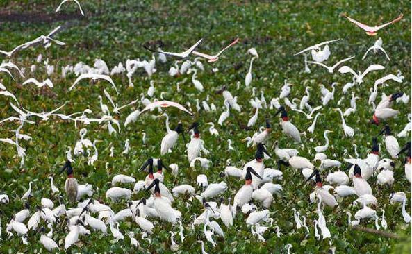 Oiseaux au Vietnam