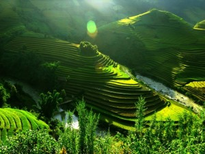 Rizieres en terrasse du Nord-Ouest du Vietnam