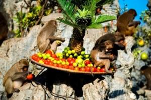 fete-des-singes